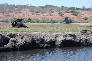 Elephant, Cape Buffalo, Crocodile